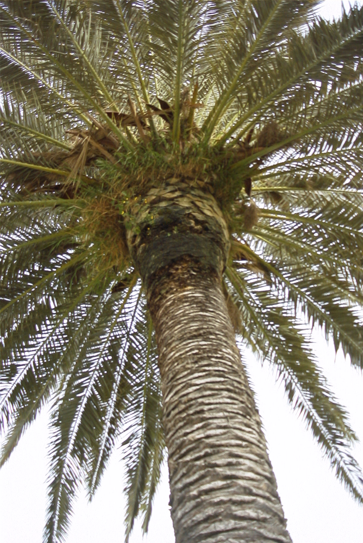 Palm Tree Галерея: Photo Library пальм.